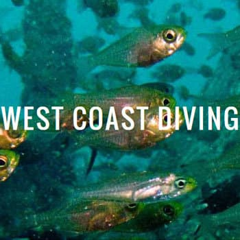 scuba-diving : colombo - the west coast diving